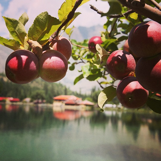 Red Apples | Shangri-la Hotel, Lower Katchura Lake | Skardu Valley, Baltistan | Northern PAK