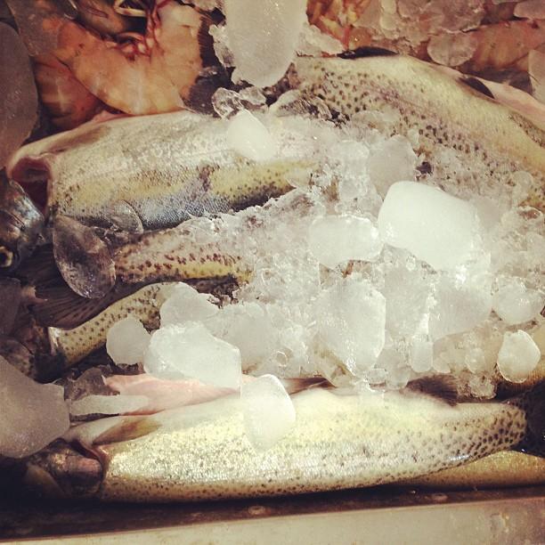 Ikan Trout From Kalam, Swat Valley Sudah Sampai, Siap Siang! | Pisces Seafood Shop, Rana Market | Isloo PAK