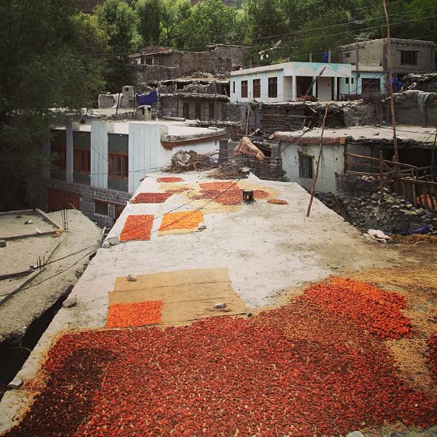 Anney! Angkat Apricot Jemuran, Hujaaaaan Mau Turun | Khaplu Valley, Baltistan | Northern PAK
