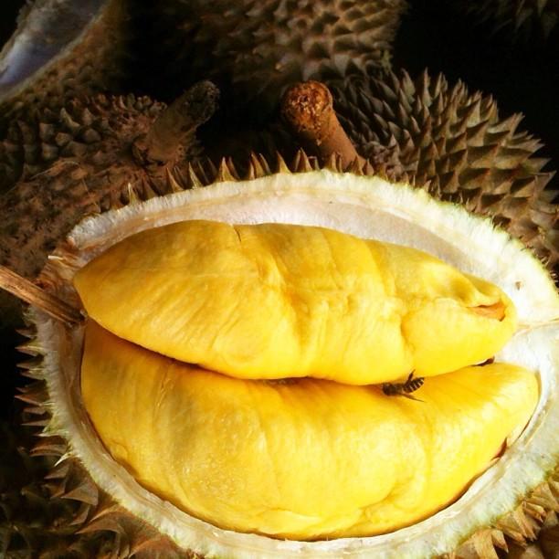 Oh Durian ! | Pasar Payang, Kuala Terengganu | Terengganu, Malaysia