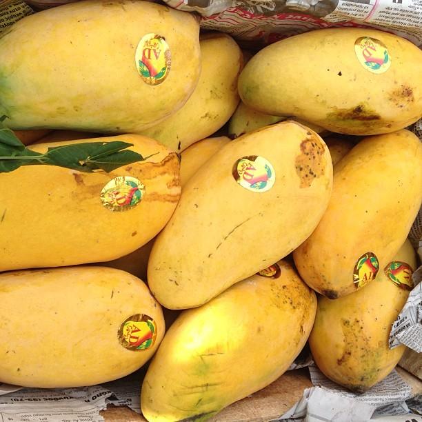 Mango Season ! with 43'c | Karachi Co, Isloo PAK