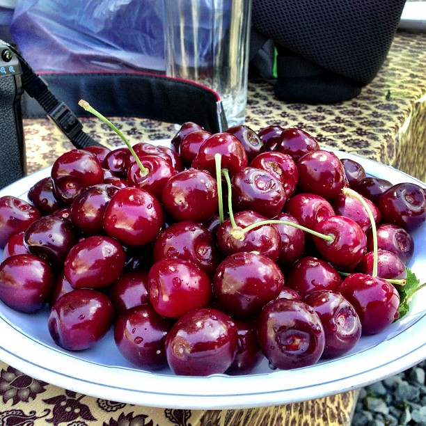 Fresh Cherries | Hunza Nagar | Facing Rakaposhi Base Camp | Hunza Valley | Gilgit-Baltistan, Northern PAK