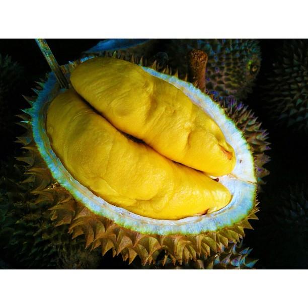 Owh Musang King ! | Durian | King of Fruits | Pasar Payang, Kuala Terengganu | Terengganu, Malaysia