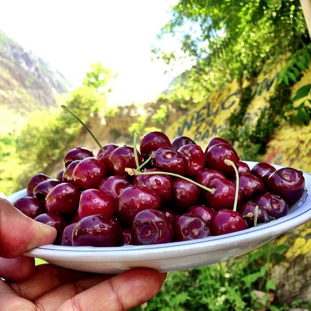 Jemput Makang! | Rakaposhi Base Camp View | Hunza Nagar | Hunza Valley | Karakoram Highway | Gilgit-Baltistan, Northern Pakistan