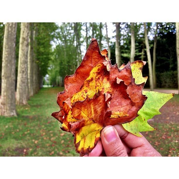 No Wonder Sejuk Giler, Sekali Dah Autumn Daaaaa | Chateau de Versailles | Ramainya Manusia | iPhoneography | #JJCMPaghis | Versailles, France