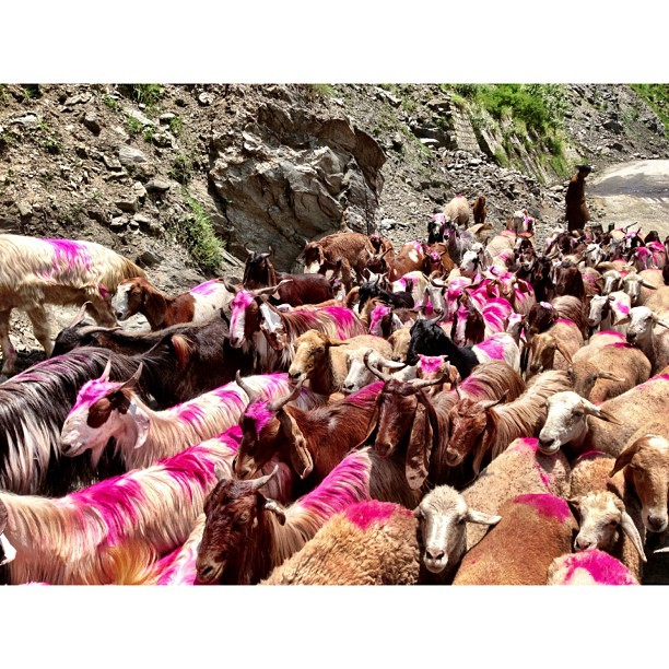 The Return of Kambing Pink Part 2 | From #Naran to #Balakot | #iPhoneography | #Kaghan Valley | Northern Pakistan Trip 2013 | #Khyber #Pakhtoonkhwa Province | #Pakistan