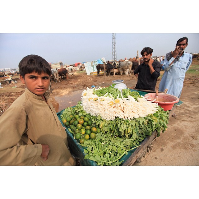 White #Radish For Breakfast ? | #Bakra Mandi | Near #Sabzi Mandi I10 | #Islamabad, Pakistan