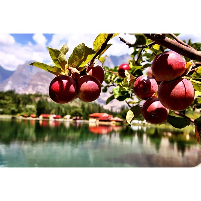 Red Apples | #Shangrila Skardu | Lower #Kachura Lake | #Skardu Valley | Summer 2012 | Road Less Travelled | Gilgit-#Baltistan Region, Northern #Pakistan