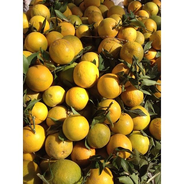 #Mosambi Orange or Sweet Lime | #Citrus #Limetta | #Winter 2013 | Fruit Walla | #Khanpur Orange Farm | Early #Orange Season | Khyber #Pakhtunkhwa Province, #Pakistan