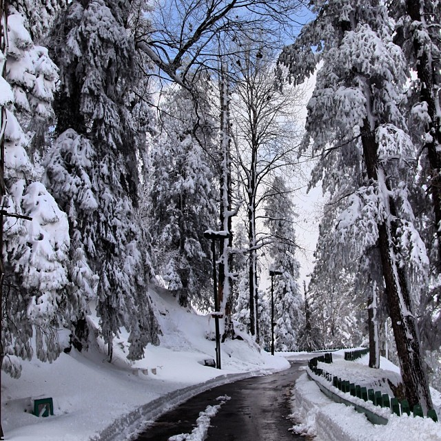 Thick Snow | #Governor House, Kashmir Point | #Murree | Winter 2012 | Punjab Province, #Pakistan