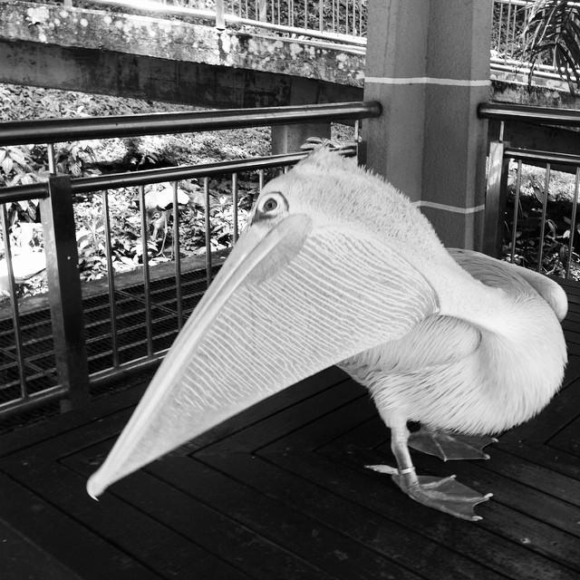 Rest Area | #BirdPark | #VisitMalaysia @igersmy | Waterfall Aviary | Kuala Lumpur | Malaysia