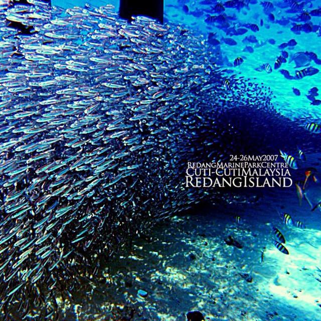 #RedangIsland #MarinePark #Throwback #TropicalFish #LagunaRedangIslandResort | Terengganu | Malaysia